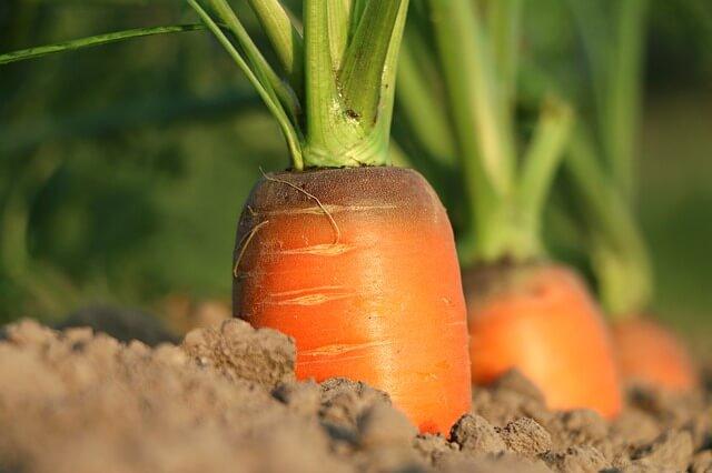 carrot-fiber